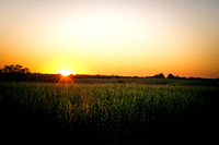 Sunset over the cornfields