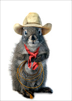 Cowboy squirrel