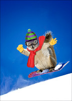 Snowboarding Squirrel