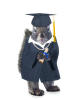 Female Graduate squirrel