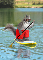 Paddle boarding Squirrel